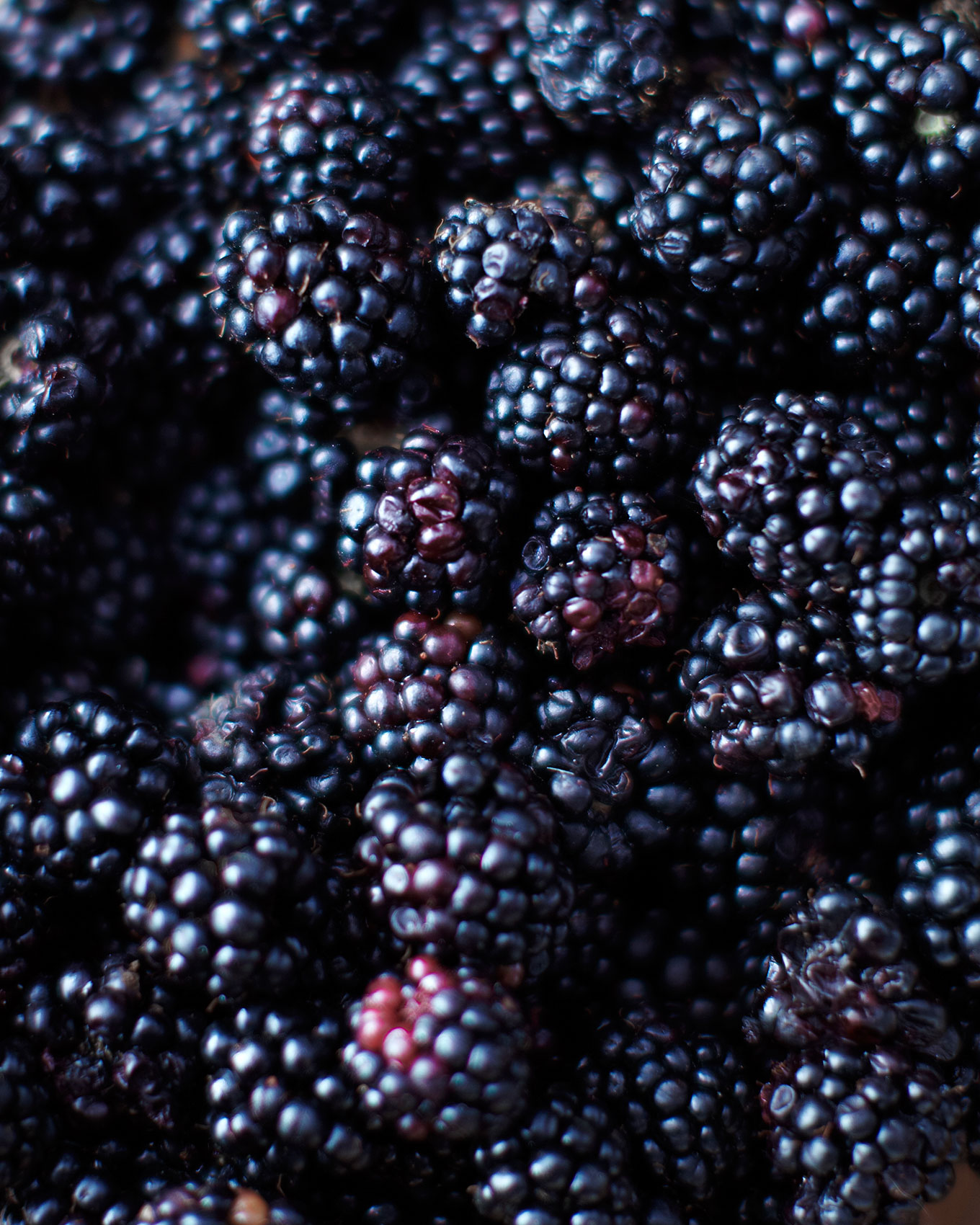 Del129_AL_Location_Blackberries_01