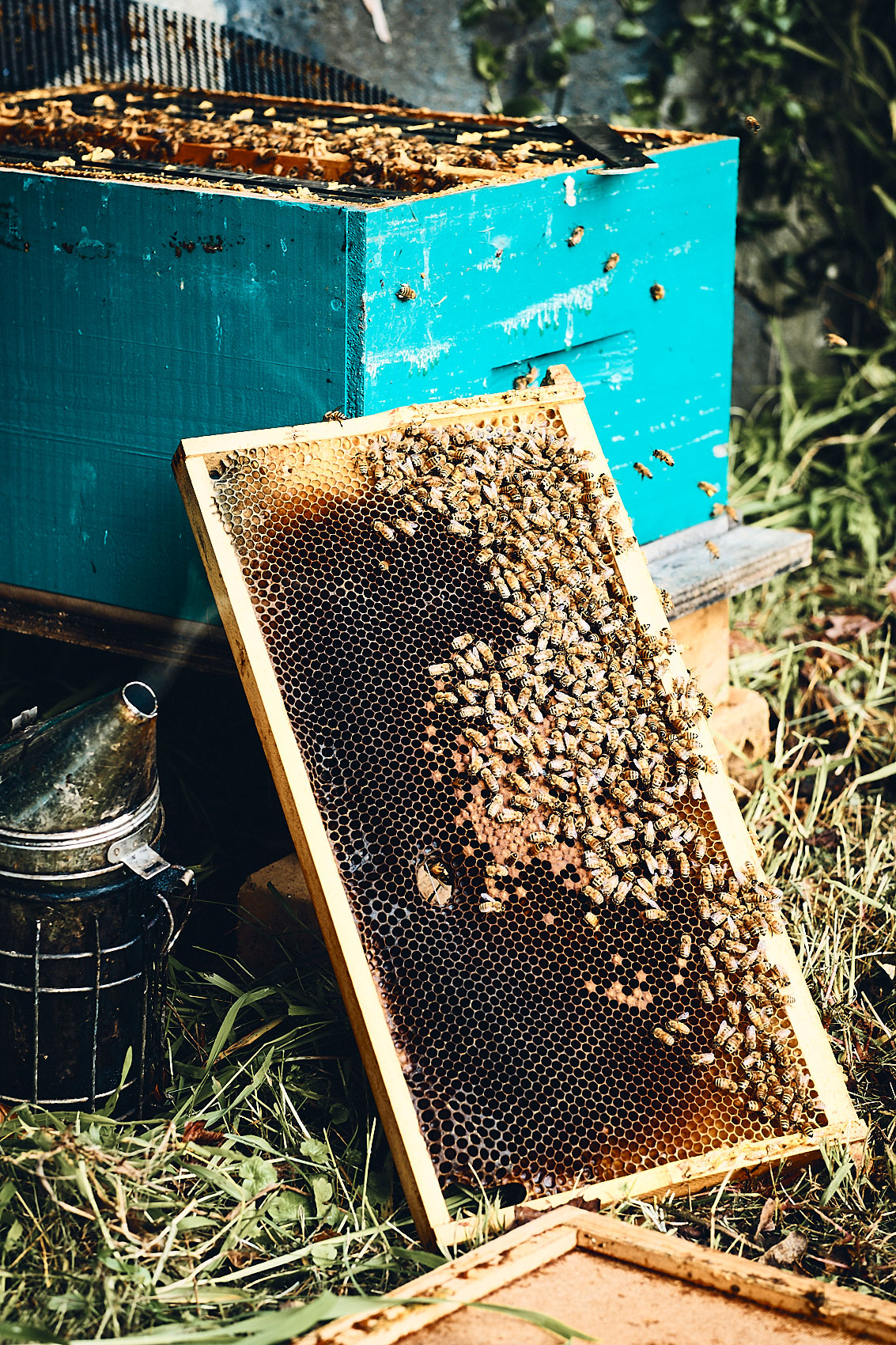 MW_Bees_August2018_035